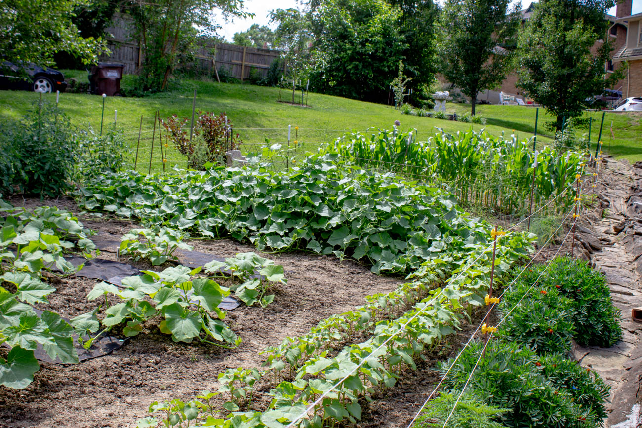 "A rare Victory Garden on the tour dates back to 1944, when these ""war gardens"" were promoted by Eleanor Roosevelt to help resupply produce during the rationing of World War II. Mrs. Carol Ann Whitehead grew up on the property, and although she's over 80 years old and has since moved to Fort Mitchell, she continues to come by and tend to the garden daily. She grows tomatoes, zucchinis, corn, green beans, pears, and apples—just to name a few. The food she doesn't can or eat herself, she donates to family and friends. / Image: Katie Robinson, Cincinnati Refined // Published: 6.24.19"