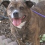 Hope has Smiles and Wags to Share