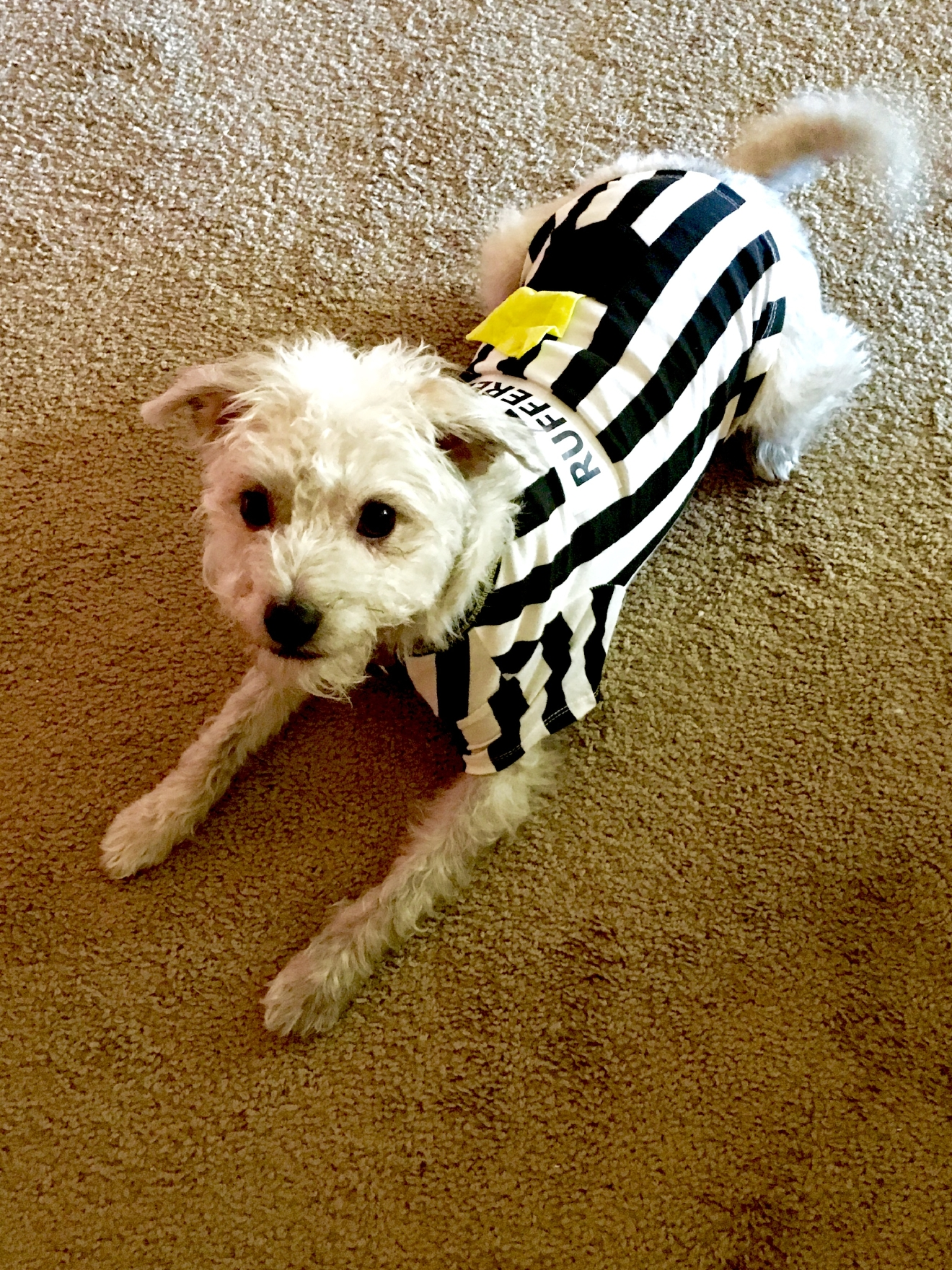 Rufus the rufferee - Brooks Jarosz.jpg