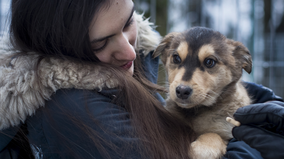Study: Pet ownership linked to higher risk of IBS