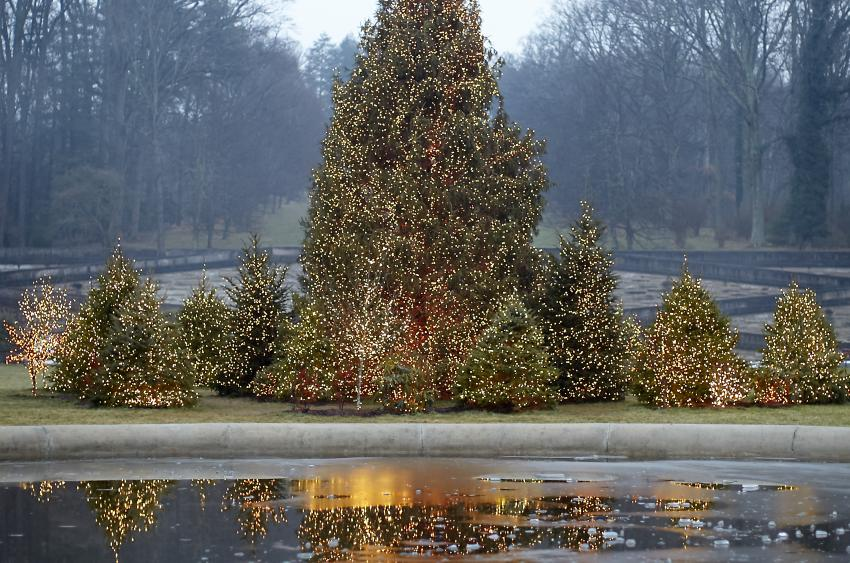55-foot-tall Norway spruce tree encircled by additional illuminated evergreens, on the Frown Lawn. (Photo Credit: The Biltmore Company)