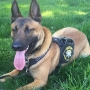 FOUND | Handler to be reunited with missing K-9, Radar