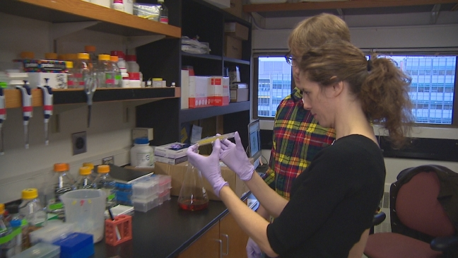 Potential cure for celiac advances at the UW