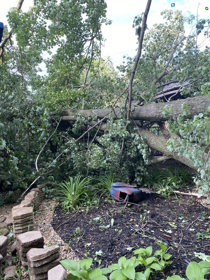 A downed tree crushes backyard structures in Bellevue, Michigan, following the June 10-11, 2020, storms that swept through the area. (WWMT/Chime In, Christin)
