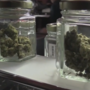 Medical marijuana rules stir controversy