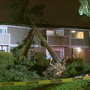 Wind knocks down trees, causes power outages around Puget Sound