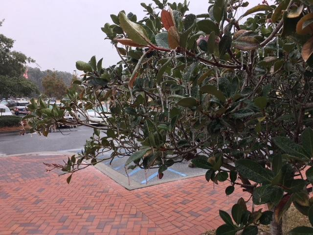 An icy coating has enveloped the Coastal Empire and Lowcountry (Credit: P. Picone)