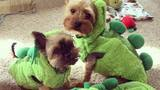 YOUR PHOTOS: Pets in costumes for National Dress Up Your Pet Day