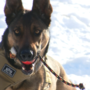 TPD hosts K9 virtual ride along