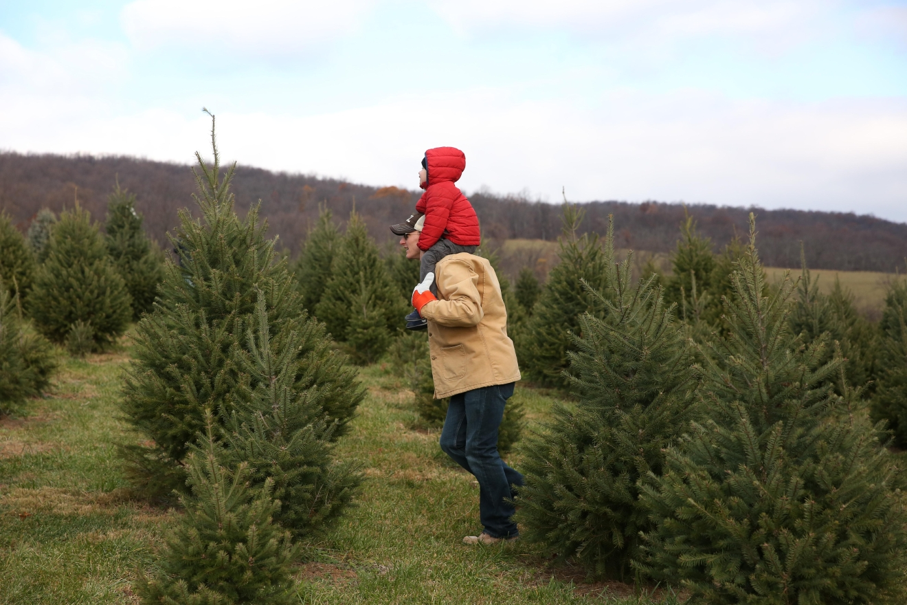 You can enjoy some complimentary hot apple cider before or after venturing into the Christmas tree fields to select your perfect tree. (Amanda Andrade-Rhoades/DC Refined)