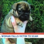 Bureau warns of puppy sale scam