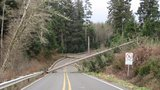 Powerful winds topple trees, knock out power north of Olympics
