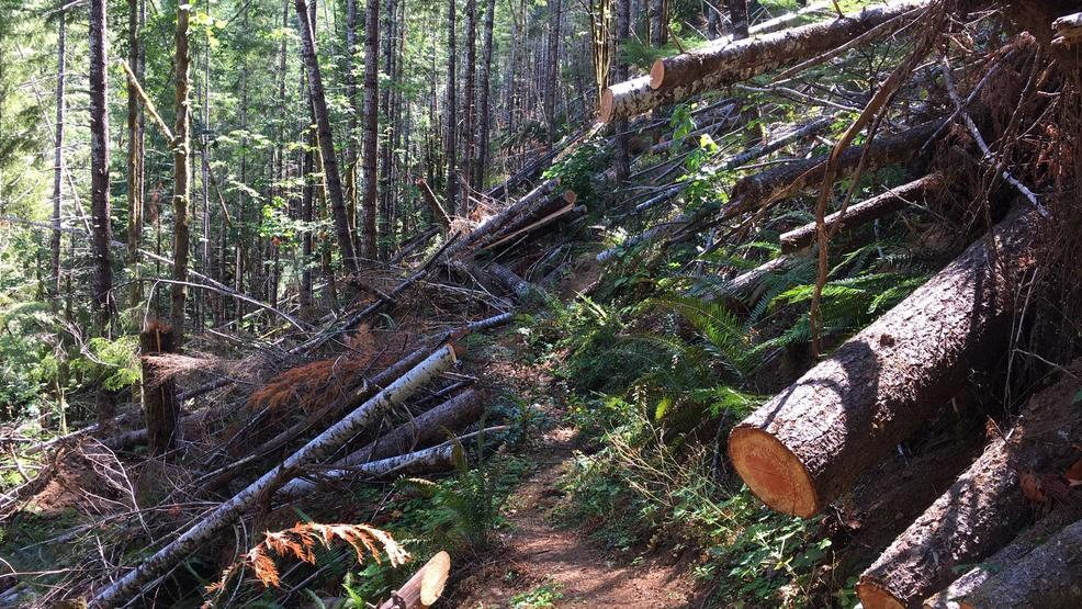 February snowstorms pummeled Oregon research forest, opened door to Douglas-fir beetles