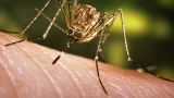 First sexually transmitted Zika case confirmed in Georgia