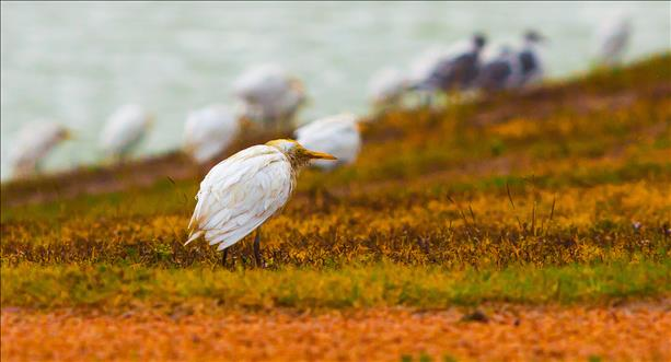 <a  href=&quot;http://share.valleycentral.com/Media/View/3299790&quot;>Egret</a>