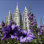 Report: Ex-Mormon's movement pulls members from church