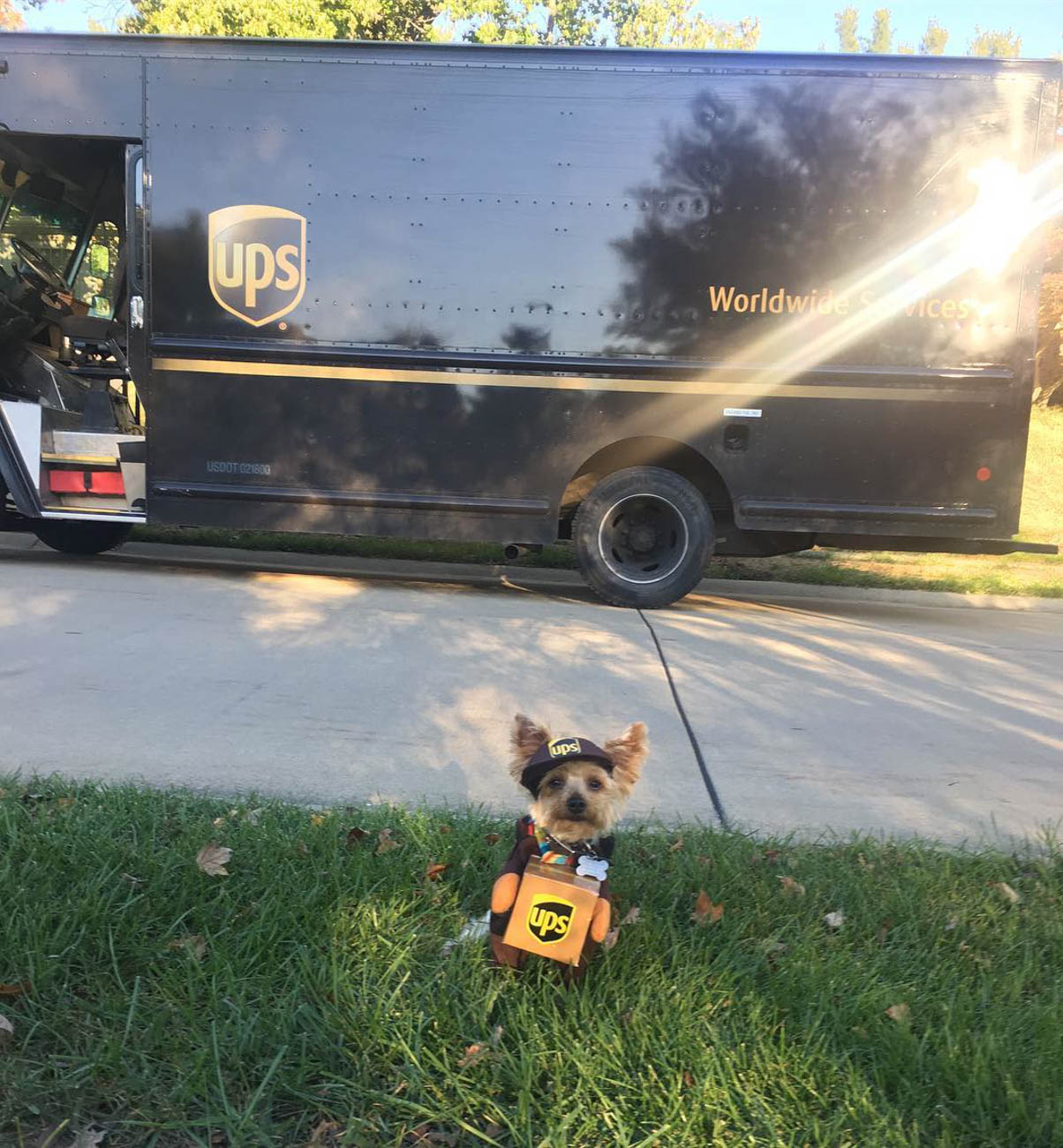 Romeo is a Yorkie from Northern Kentucky who loves to greet the delivery man—aka his idol. / Image courtesy of Instagram user @ro.the.yorkie // Published: 11.28.18