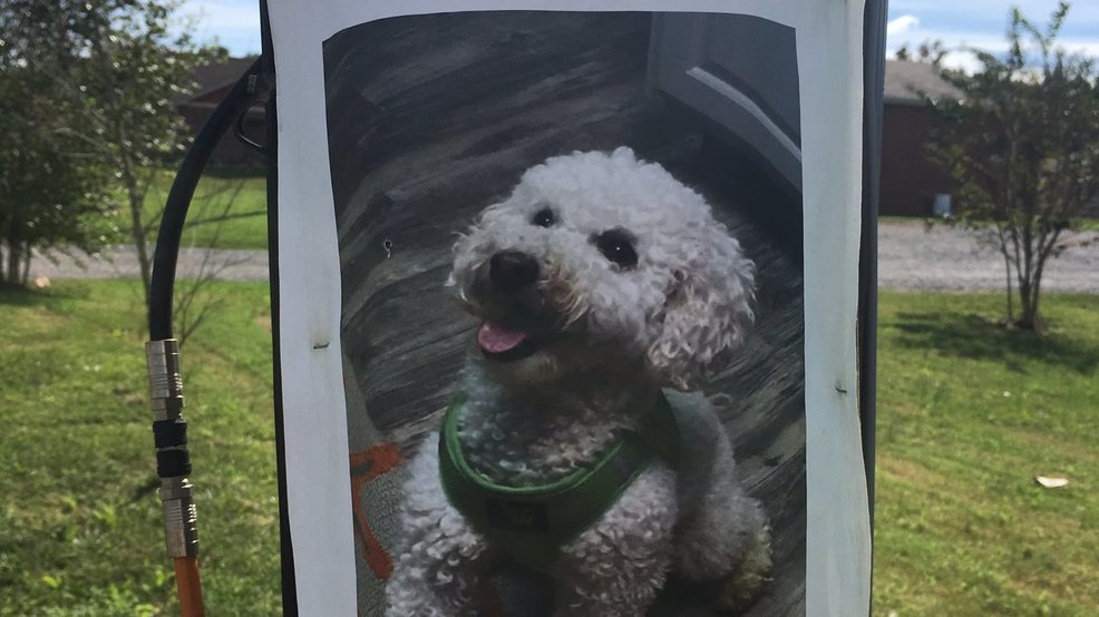 Cleveland Tennessee Family Finds Their Stolen Dog In Athens