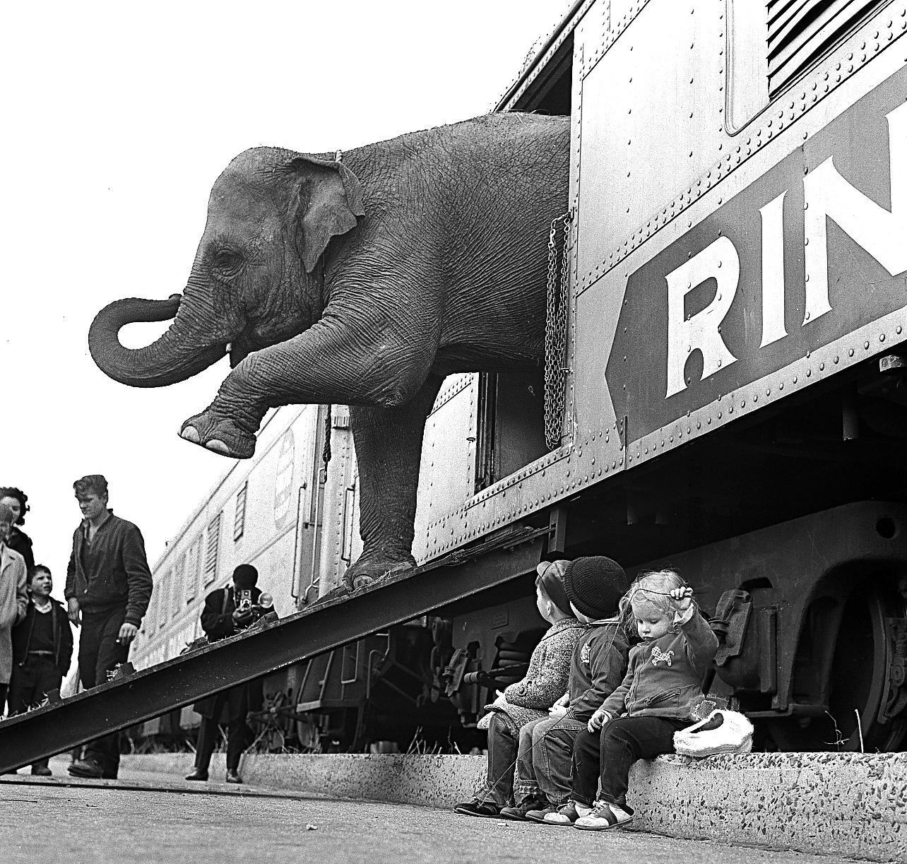 FILE - In this April 1, 1963 file photo, a Ringling Bros. Circus elephant walks out of a train car as young children watch in the Bronx railroad yard in New York. The Ringling Bros. and Barnum & Bailey Circus is drawing to a close in May 2017, after 146 years of performances and travel. (AP Photo)