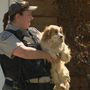 Man arrested after Kern County Animal Services finds 160 dogs in Tehachapi home