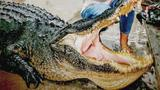 Summerville grandmother bags massive alligator in hunt on Cooper River