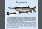 paddlefish twra photo.JPG