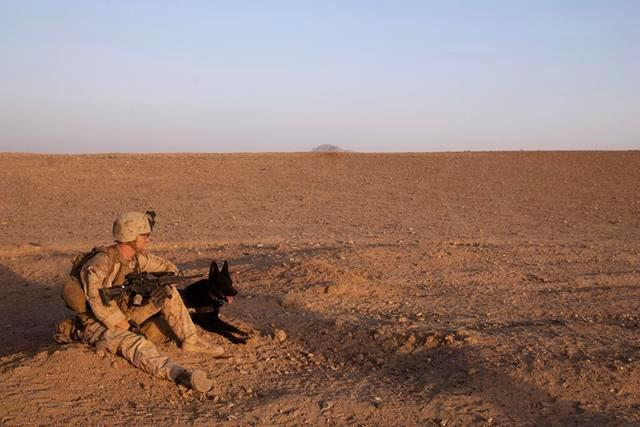 U.S. Marine Corps Cpl. Adam Cook and his military dog, Falco, take a break during a patrol in Mohammad Abad village in Afghanistan's Helmand province, July 23, 2013. Cook, a dog handler, and Falco are assigned to the 2nd Law Enforcement Battalion.