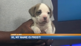 Adopt-A-Pet: Frost