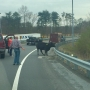 Cow wreaks havoc on busy roads in Lynchburg