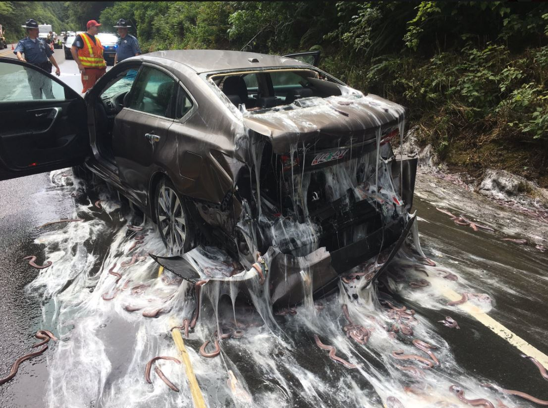 Eel truck overturns on Highway 101 (Photo: Oregon State Police)