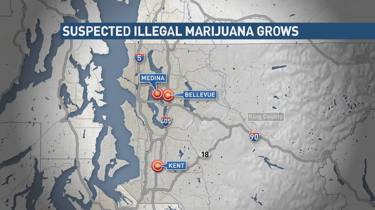 More Chinese Nationals busted in crackdown on illegal pot grows (KOMO New)