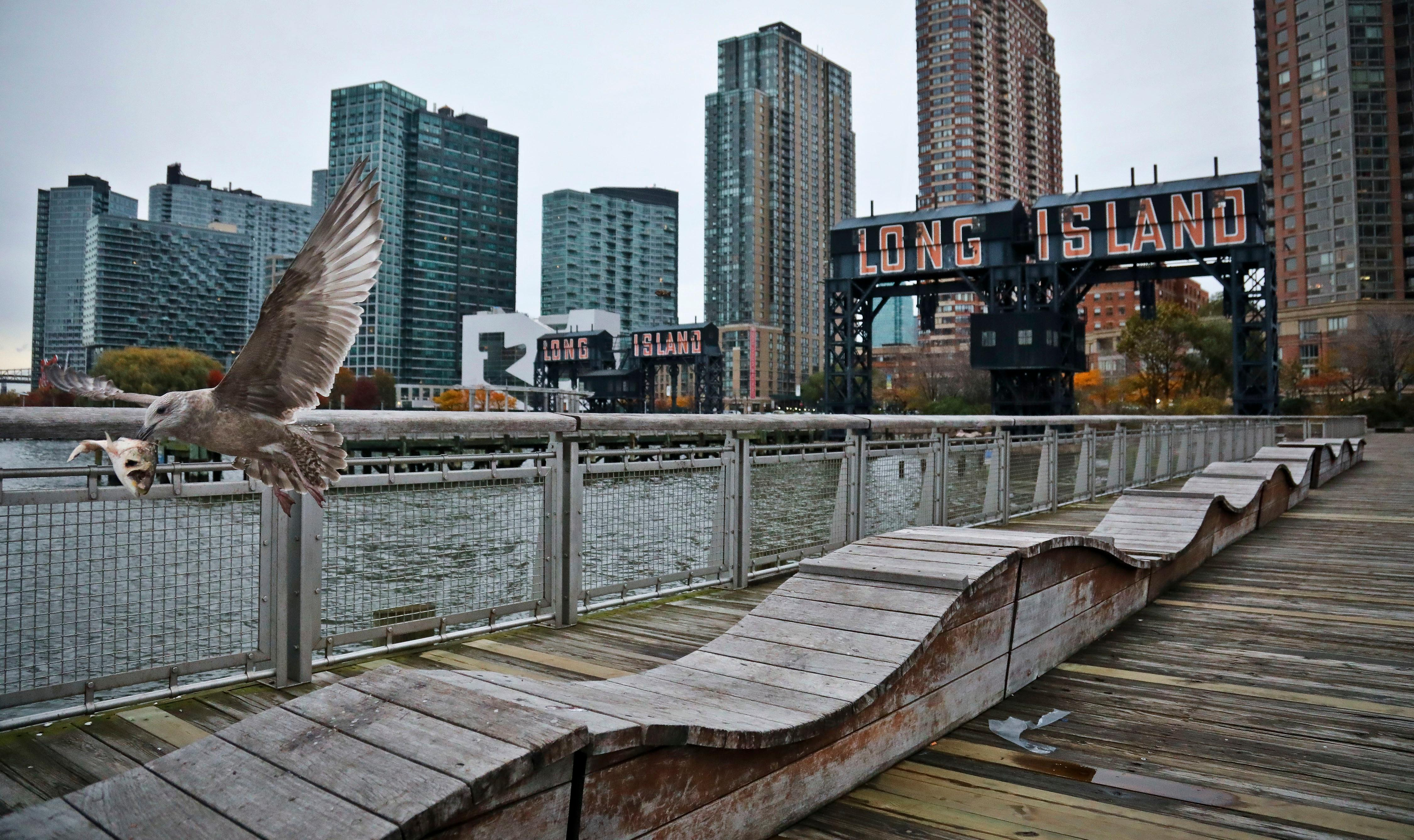 "FILE - In this Nov. 13, 2018, file photo, a sea gull flies off holding fish scraps near a former dock facility, with ""Long Island"" painted on old transfer bridges at Gantry State Park in the Long Island City section of the Queens Borough in New York.{ } (AP Photo/Bebeto Matthews, File)"