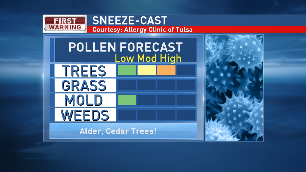 High tree pollen making you sneeze