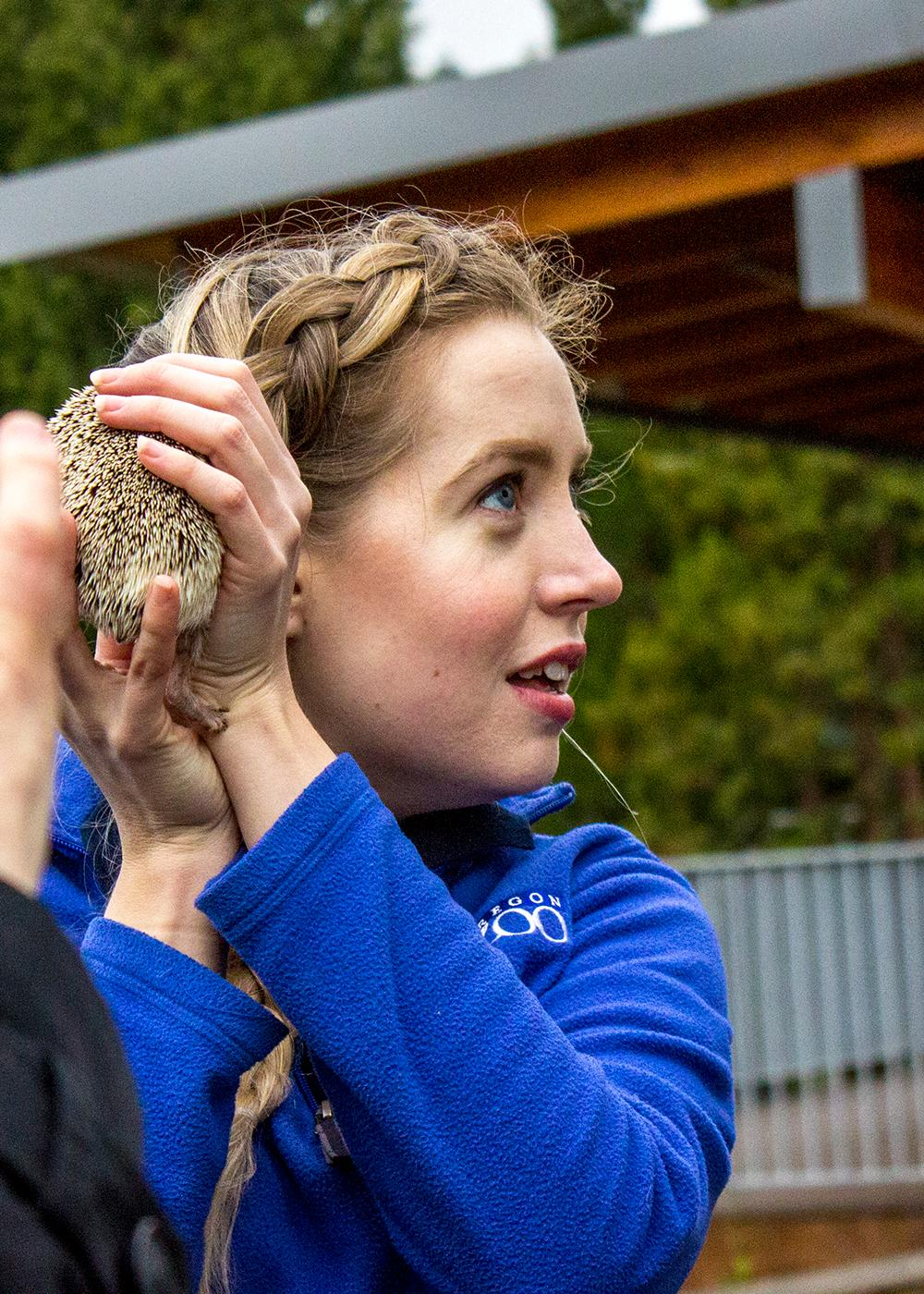 "Fufu the hedgehog made her weather prediction on what the Oregon Zoo calls ""Hedgehog Day 2018."" Most observe Feb. 2 as ""Groundhog Day,"" but the zoo instead brings out their trusty hedgehog named Fufu to look for her shadow. Like the groundhog, if Fufu sees her shadow, there will be six more weeks of winter. If not, there will be an early summer. This year, Fufu said spring is on the way after not seeing her shadow. Photo by Amanda Butt"