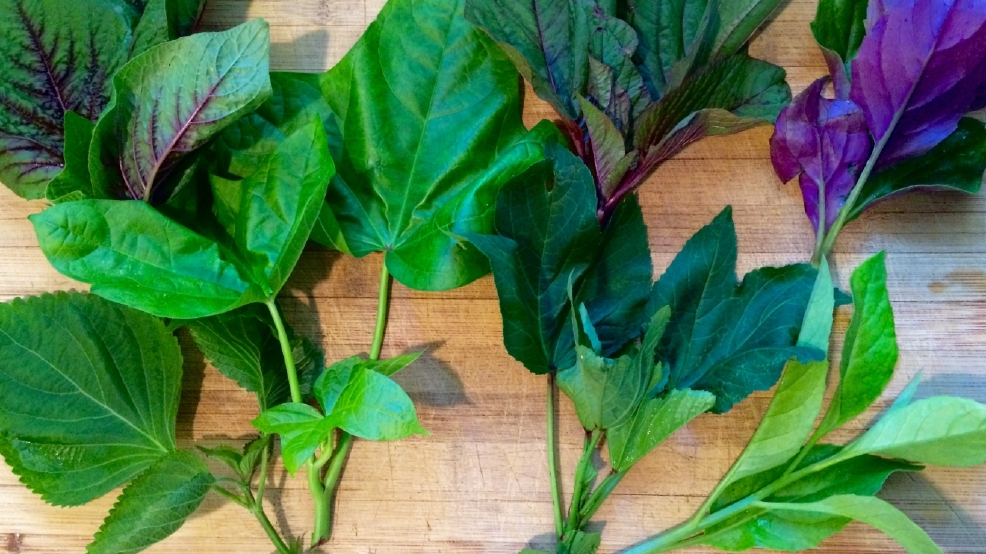 Summer Greens Make Average Salad Look Like Junk Food Wpec