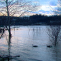 Locals prepare for rising Ohio River as water floods streets