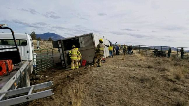 Truck hauling cattle crashes in Central Oregon