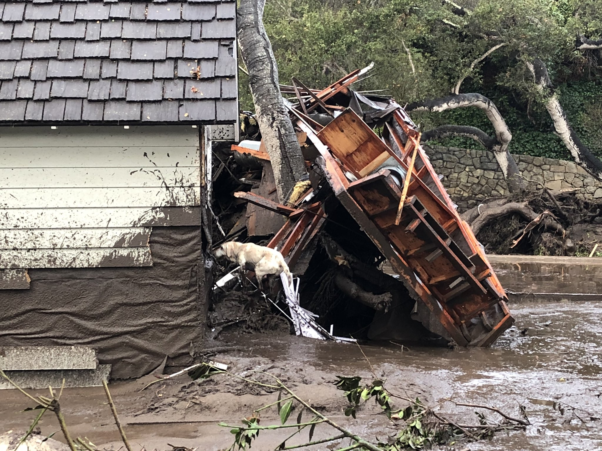 Santa Barbara County Fire Search Dog Reilly looks for victims in damaged and destroyed homes in Montecito following deadly runoff of mud and debris from heavy rain overnight. (Photo: Mike Eliason / Santa Barbara County Fire)
