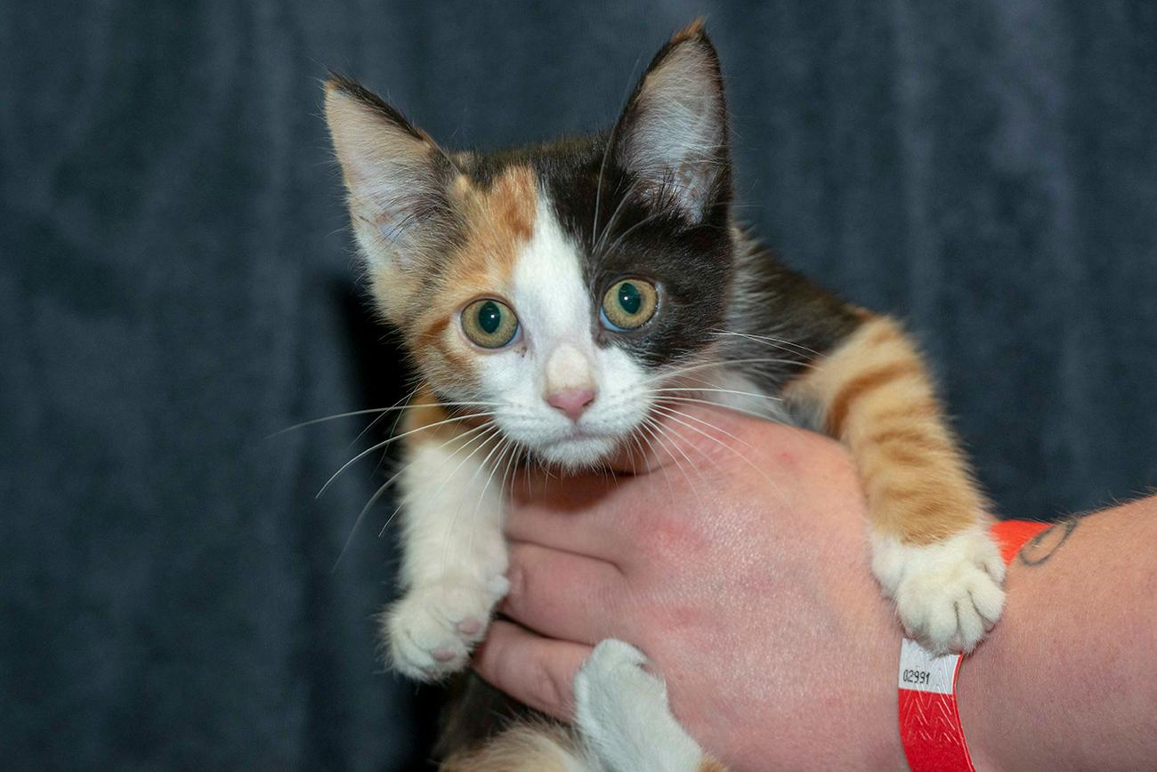 Sparkle, a Calico that was up for adoption{ }/ Image: Joe Simon // Published: 4.28.19