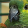New Hampshire SPCA looking for person who left parrot in plastic bag