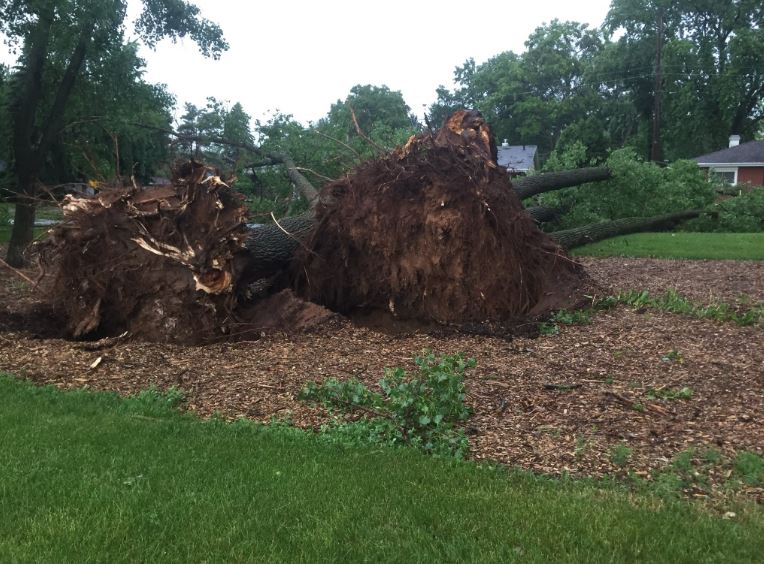 Trees uprooted in Green Bay, June 14, 2017. (WLUK/Ben Krumholz)
