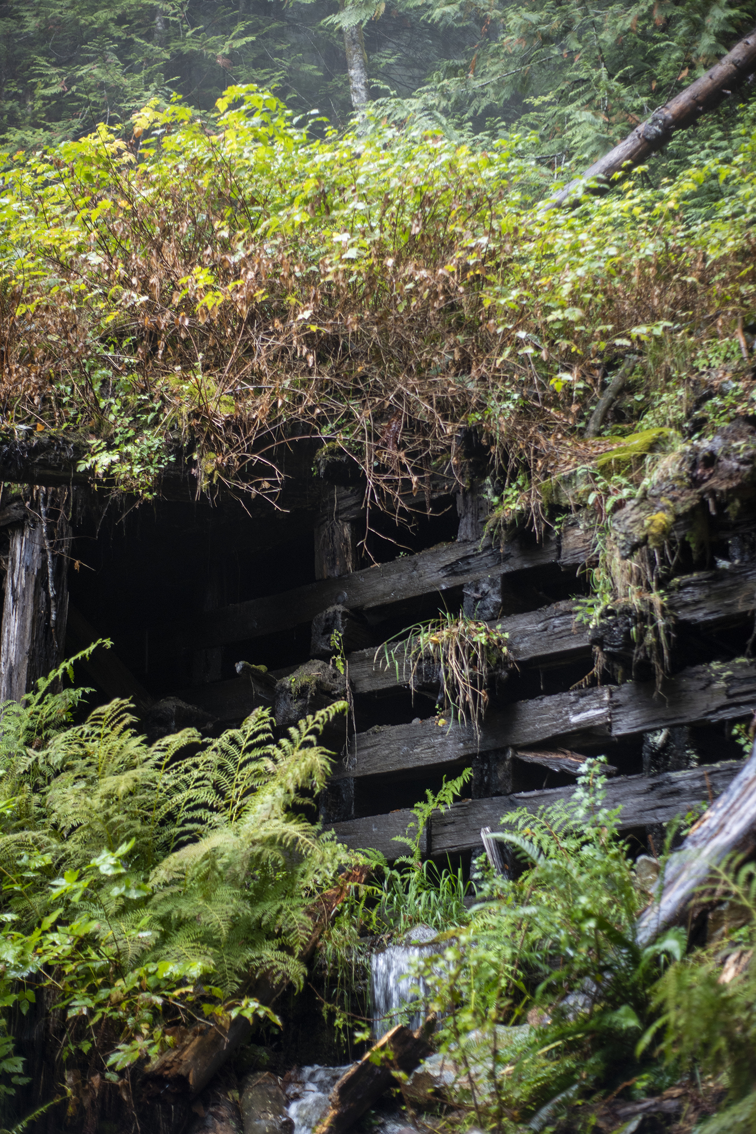 Several dark and empty tunnels are met with trails leading up to the entrance. Clearly marked signs indicate the ones that are safe to enter, but all showcase collapsed timbers and crumbled concrete that once stood as protection from passing trains. (Image: Rachael Jones / Seattle Refined)
