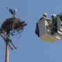 WATCH: Idaho Power crews rescue osprey on top of power pole