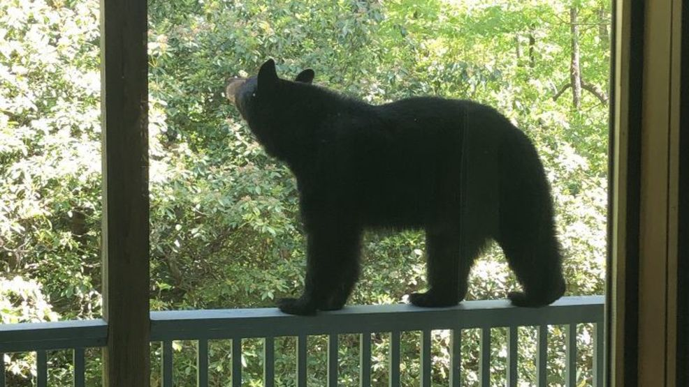 Are there more bears in WNC, and are they getting more aggressive?