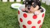 Let's celebrate puppies! | SHARE YOUR VIDEOS & PHOTOS