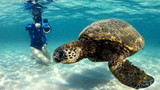 VIDEO: Diver's enchanting ocean footage of endangered green turtle
