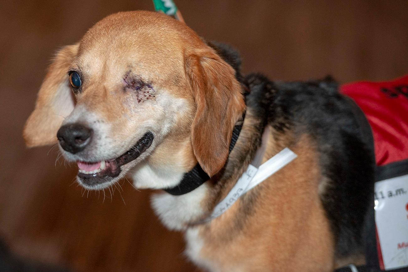 Baby, a Beagle mix who had his left eye removed due to an eye infection / Image: Joe Simon // Published: 4.28.19