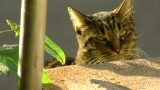 SPCA investigating claims of cats being poisoned