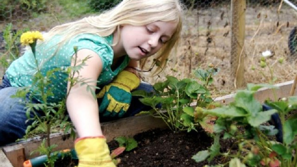 Roses In Garden: Community Garden To Open At The Illinois State Fairgrounds