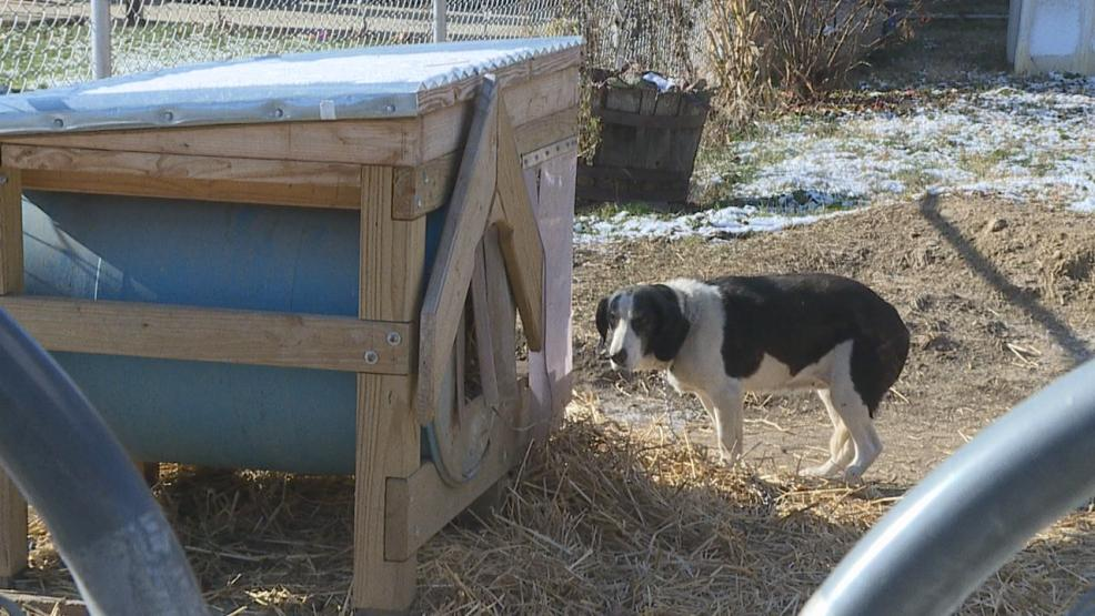 With freezing temperatures and a new anti-tethering law in effect, Columbus Humane Society agents are seeing a big increase in calls (WSYX/WTTE)<p></p>